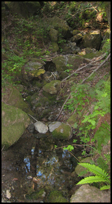 Photo of rocky creek bed, Deer Park