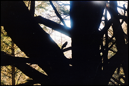 Photo of bird in tree, Pt. Reyes National Seashore