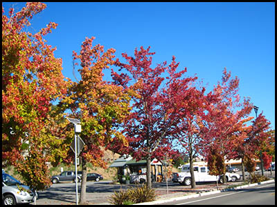 Photo of fall foliage, Fairfax